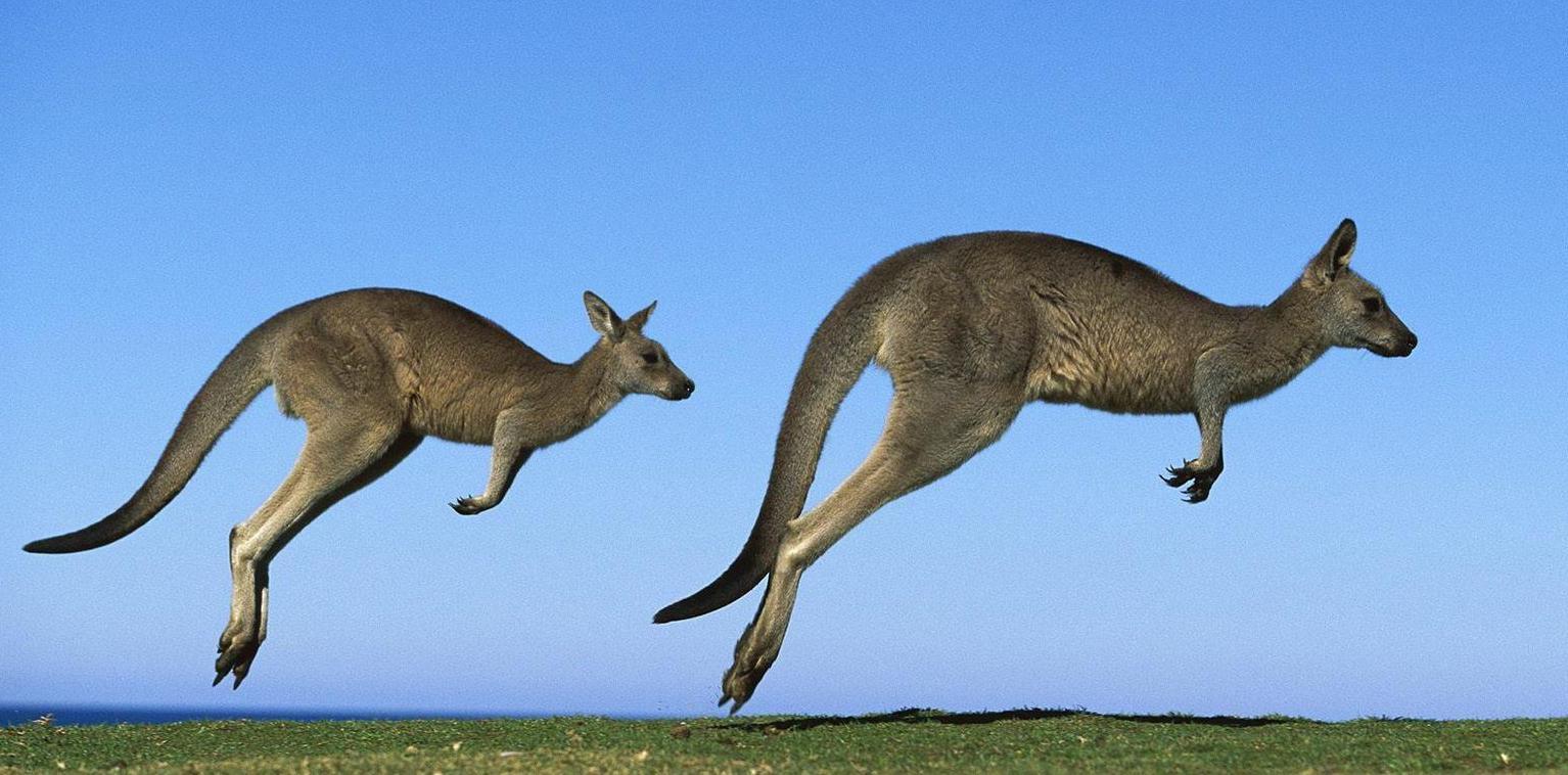 Растения и животные австралии фото с названиями